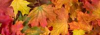 Høstblader.foto